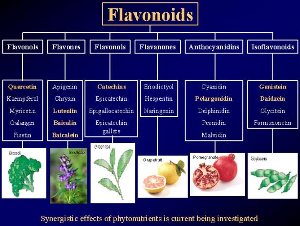 FlavonoidsTypes2