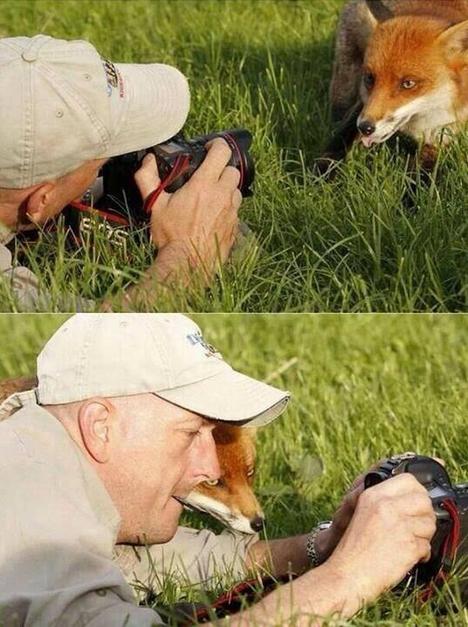FoxAndCameraman