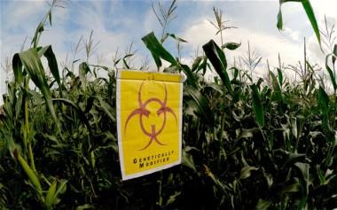GMOsSafe