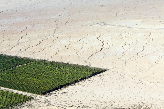 In this May 1, 2015, aerial photo, irrigated citrus trees sit surrounded by bone-dry land near Westmorland, Calif. The Imperial Valley's half-million acres of verdant fields end abruptly in pale dirt that gets three inches of rain annually on average. (AP Photo/Gregory Bull)