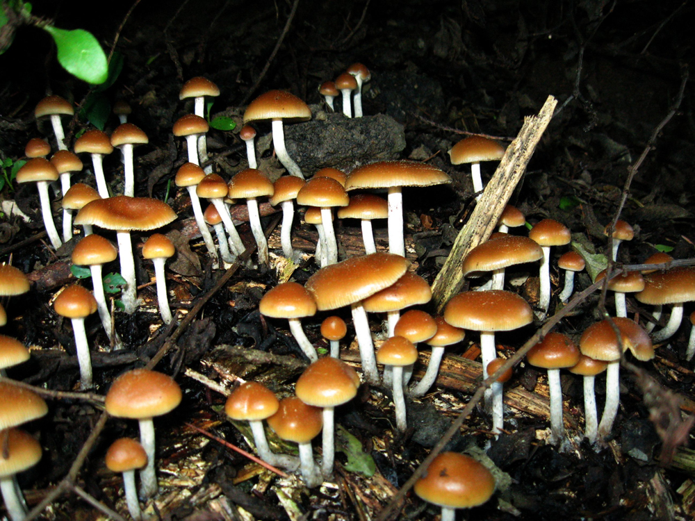 Hallucinogenic In Mushrooms Can Spur Long